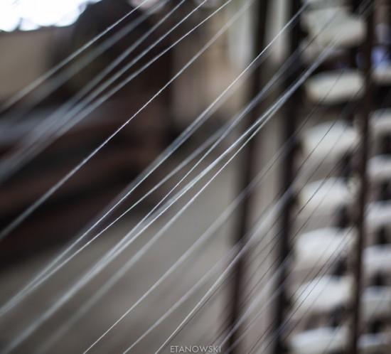 silk farm-2593